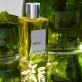 Néroli Eau de toilette | Amarante Parfums